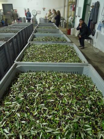 Olive-Oil-5.Blog
