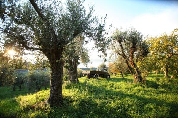 Olive-Oil-blog3