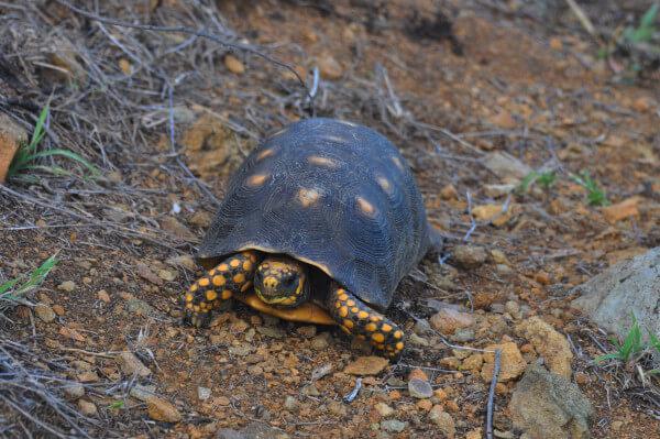 blog-turtle